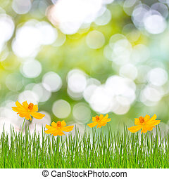 Spring or summer season abstract nature background with...