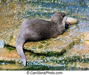 Otter 2 - Otter