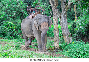 Portrait of Asiatic Elephant, Thailand