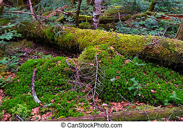 Mossy Fallen Tree, Nagano Prefecture/Japan, 2013/6/6.