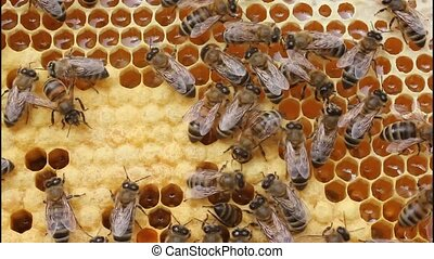 Bees in hive taken out of box