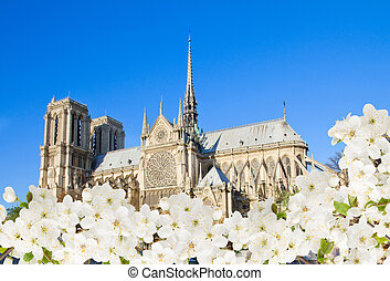 Notre Dame cathedral, Paris, France - Notre Dame cathedral...