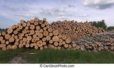 lots of wooden piles