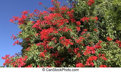 red blossoms on tree in India
