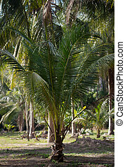 Plants and palm trees in tropical jungle - Rainforest...