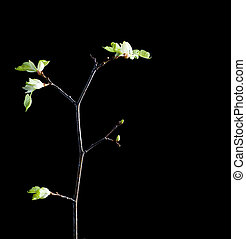 tree growing on black background.