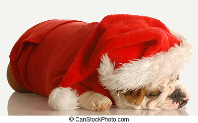 dog dressed as santa