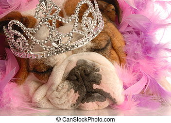 pampered dog - english bulldog with tiara and pink feather...