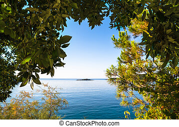 views through the forest on a calm sea and with a clear blue...