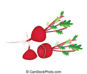 Delicious Fresh Red Beet on White Background - Vegetable,...