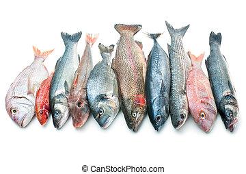 produkty morza, odizolowany, biały, tło
