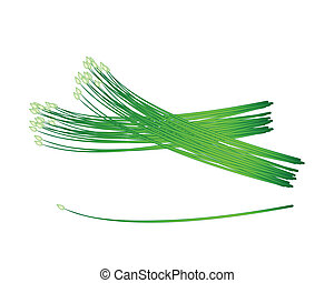Flowering Garlic Chives on A White Background - Vegetable...