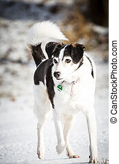 Pretty mixed breed dog - A pretty black and white mixed...