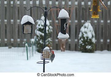 March Birds Feeding - Backyard song Birds