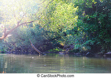 Forest river scene with trees over the water