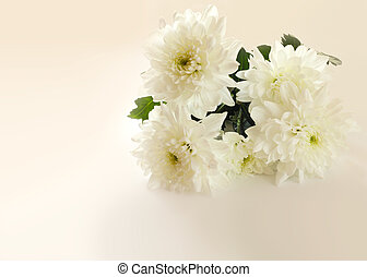 Chrysanthemums - Bouquet of beautiful chrysanthemums on...