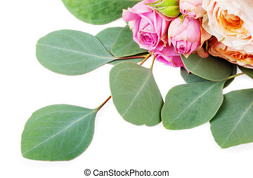 Rose flowers on green leaves of eucaliptus isolated on white...