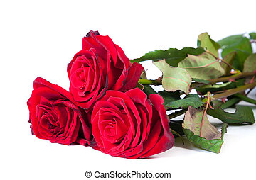 Three fresh red roses over white background - Three fresh...