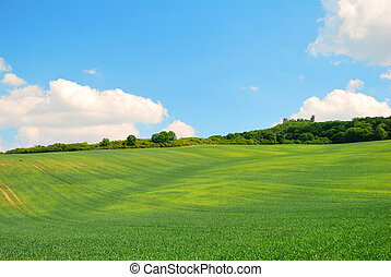 Green wavy spring field and blue sky with clouds