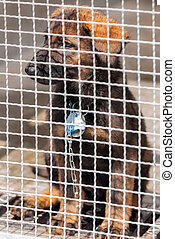 Puppy in captivity - A sitting puppy behind grating with a...