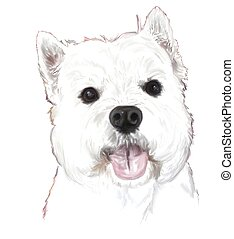 Westie's big eyes - A West Highland White Terrier face with...