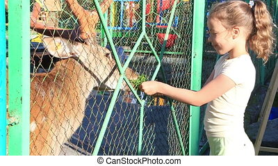 Little girl feeding a spotted deer. - Little girl feeding a...