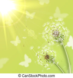 White dandelions with summer sun background vector...