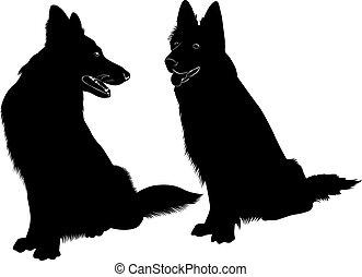 pastor, cão, cão, animal