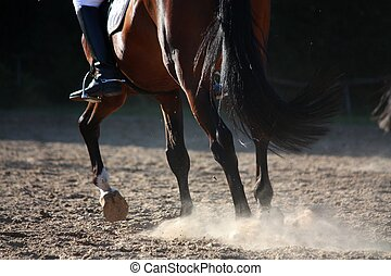 Close up of horse legs running - Close up of sport horse...