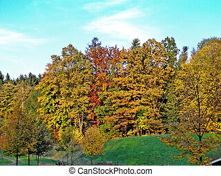 Deciduous trees in autumn - A view from the window on...