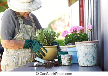 Senior gardener potting young plants in pots - Senior female...