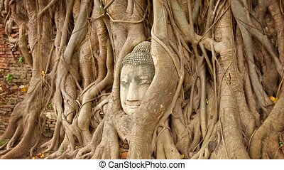 Stone face buried in the roots of a tree. Thailand,...