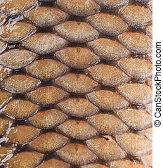 Carp fish scales Background