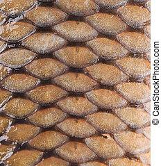 Carp fish scales. Background.