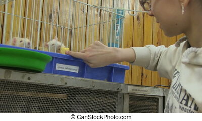 petting zoo - a person feeding rats in the cell