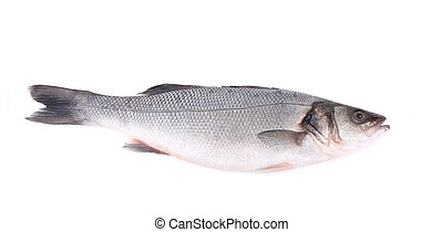 Seabass, Dicentrarchus labrax. Isolated on a white...