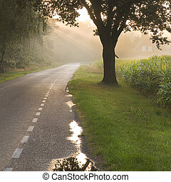 Dutch country road and farm with sunbeams - Dutch country...