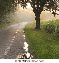 holandês, país, estrada, fazenda, raios sol