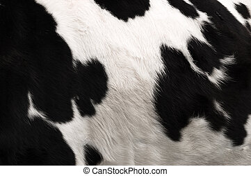 Cow hide print - an image of real black and white cow hide.