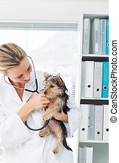 Veterinarian examining puppy - Female veterinarian examining...