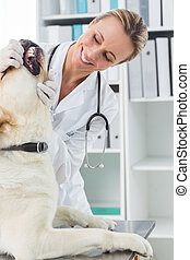 Vet examining teeth of dog