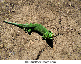 lizard reptile animal nature green
