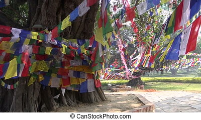 trees with Buddhist praying flags in Lord Buddha birthplace...