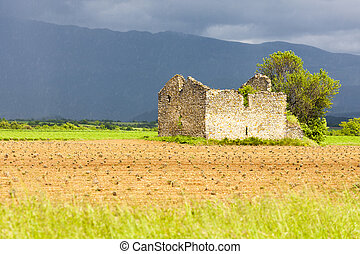 field with a ruin of house and tree, Plateau de Valensole,...
