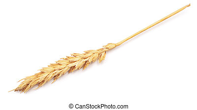 ear of wheat on white background