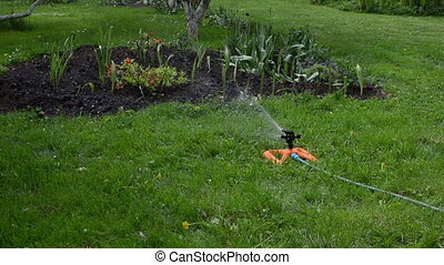 sprinkler woman hose