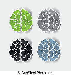 realistic design element: brain Vector Illustration