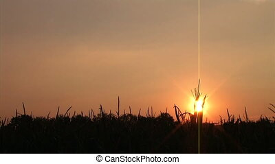 Cornfield Sunset Time Lapse - Time-lapse of sunset behind...
