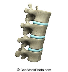 Vertebrae - Very high resolution 3d rendering of four human...