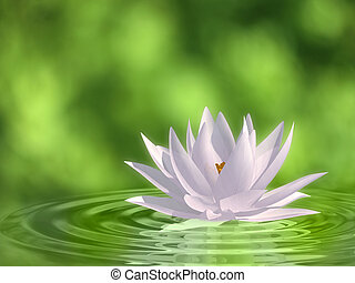 Floating waterlily - Very high resolution 3d rendering of a...